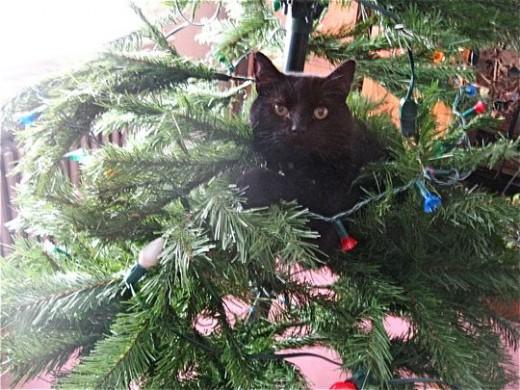 Danger in the Christmas Tree