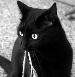 Five Best Cat Behaviour Books