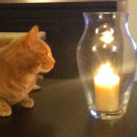 My cat was well supervised when I took this photo. You should never leave your pets unattended near open flames, fireplaces, or candles.