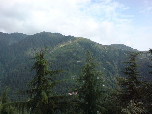 Dalhousie, Himachal Pradesh. Trees in foreground are Cedrus deodara.