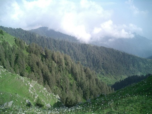 The nature at Dalhousie