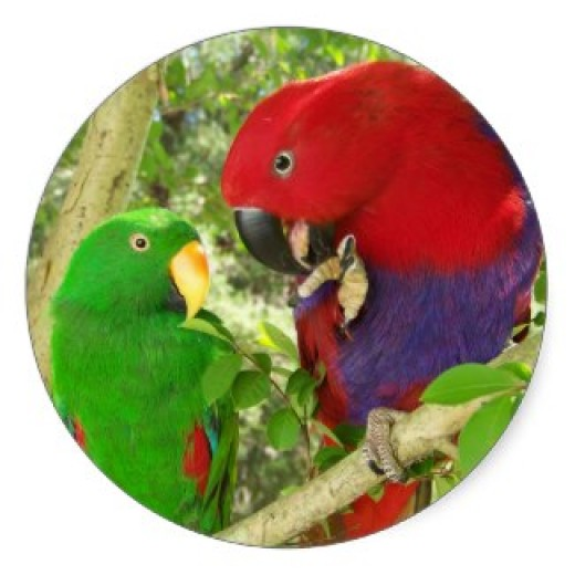 Pretty Parrots Round Sticker