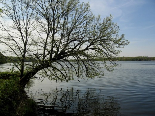 Tree by the Illinois River (Psalm 1:2)