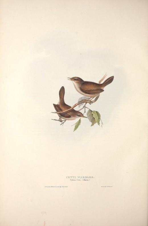 Birds of Europe . John Gould {1837}