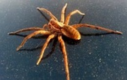 Imagine a spider as big as a dinner plate. Our spider was all black and HUGE