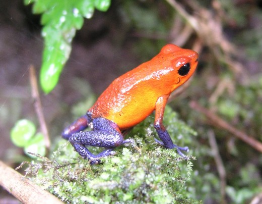 Frog in the Rainforest