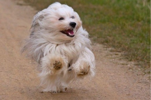 Pets Love Activity