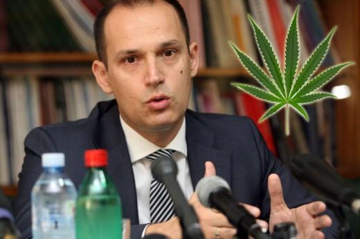 http://www.telegraf.rs/vesti/politika/1238014-revolucionarano-srpski-ministar-zdravlja-za-legalizaciju-marihuane-u-srbiji