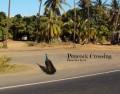 Peacocks, the Royal Birds of Maui
