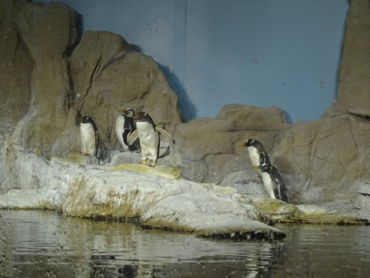 Sad looking penguins in the Aquarium - very inappropriate for the Mediterranean, especially in promotional materials