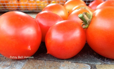 This plump cherry tomato has a little point on the bottom. *The tomato originated in South America.