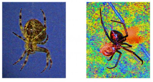 Spider posters - copyright thumbprints are on file