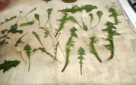 Go foraging for wild foods on Samhain.  Dandelions, wild mint, and white clover my family gathered and turned into a salad.
