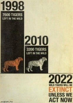 Save the tigers 2014