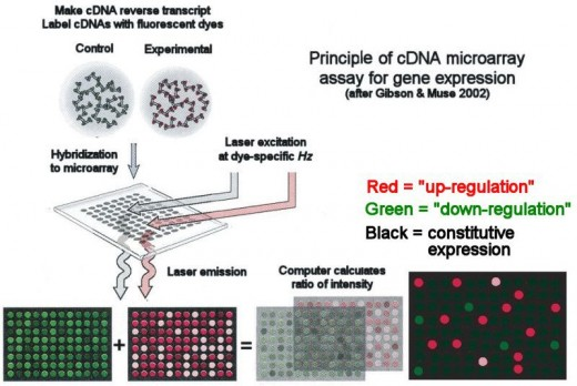 Microarray Principle