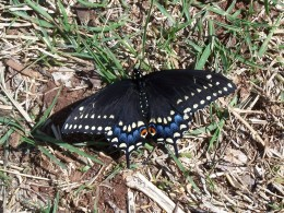 A beautiful butterfly may just be a great motivating source for a poet.