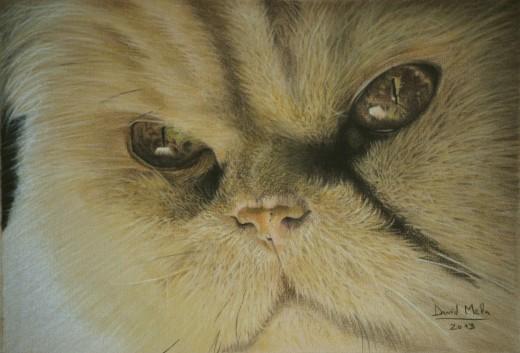 Persian Cat - 2013