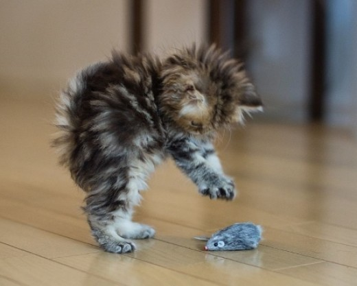 Aaagh, it's jumpy!