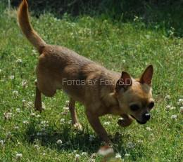 Max on patrol in his yard