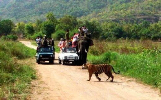 Elephant and Jeep Safari in Kanha