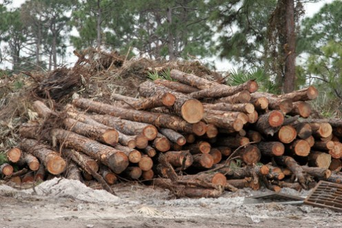 A log is a portion or length of the trunk, or a large limb, of a tree after cutting down trees and timbering on land. It's also to compile, amass, and keep a record of a day's events, like for ships and airplanes.