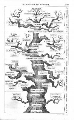 My Evolving View on Evolution