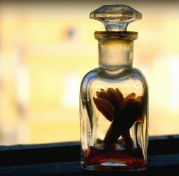 Some are like Nard:  Aromatic and Warm -  Photo by Juan Antonio F. Segal
