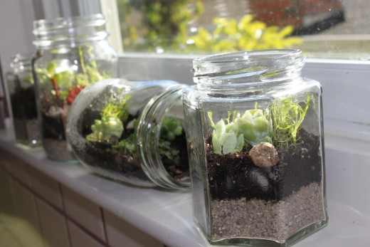 Recycled Jar Terrarium