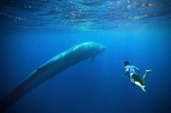 Amazing Blue Whale