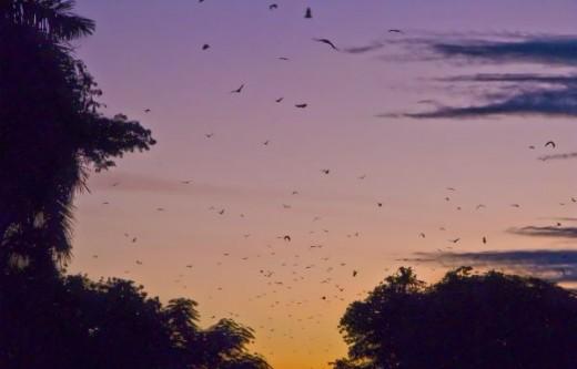 Bats at Twilight