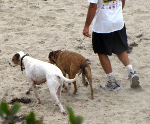 Dogs, people and the beach go together.