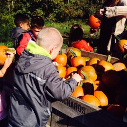 Maddox picking apples on his field trip to Stepp orchards