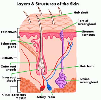 Skin Layers and Parts