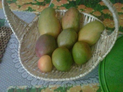 Mangoes can be quite fattening for fruits!