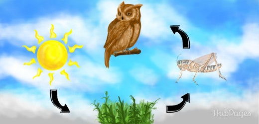 The ecological cycle: plants process the sun's energy through photosynthesis, insects eat plants and absorb the sun's energy, and owls eat small mammals.