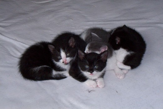 "A group of kittens is called a ""kindle"" of kittens."