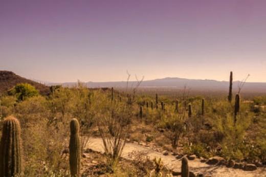 the desert landscape is so serene during fall