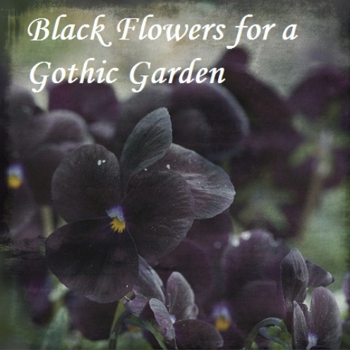 Black Flowers for a Gothic Garden