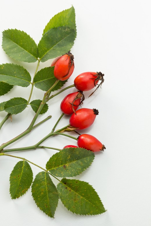 Rosehip Oil promotes skin regeneration and healing.