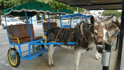 Donkey rides are popular in the hillside town ! Make sure you do day trips and explore more of Spain while here.