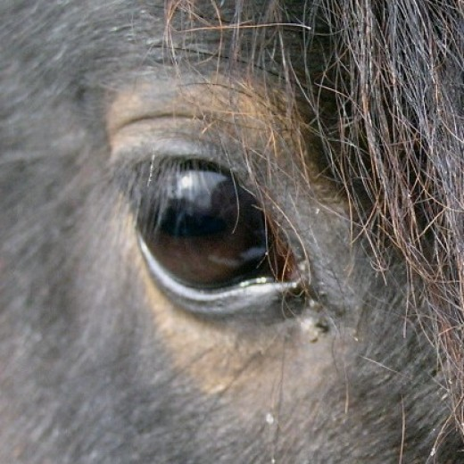 Horses can see well at night