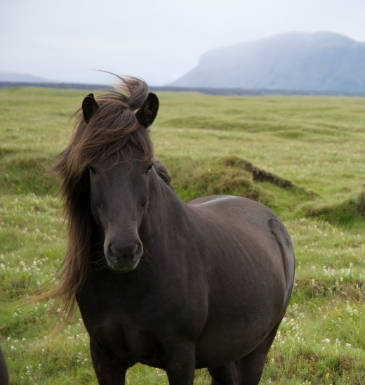 Horses have survived for millions of years using their five senses
