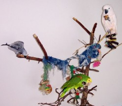 Birdies in the Background--Life With Three Playful Parrots