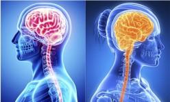 Female vs. Male Brain