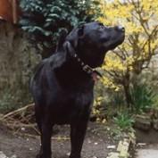 dai76 profile image