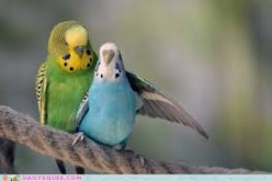 Have you ever had a parakeet or other bird that talks for a pet, and if so, what did it say?