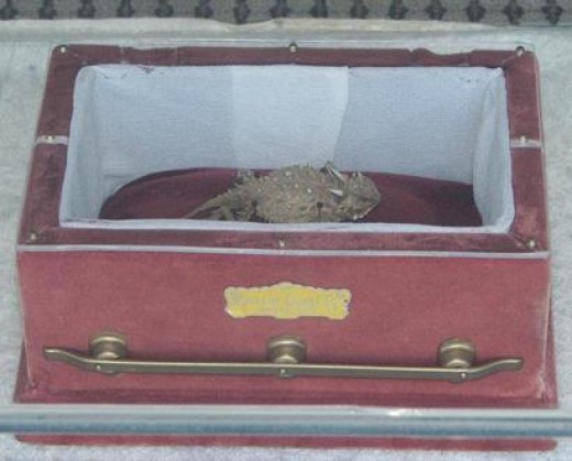 Old Rip in his casket in Eastland, Texas