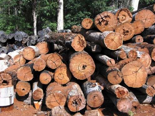 Cut timber in storage for later processing at a sawmill