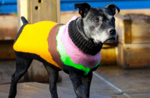 A dog wearing a colourful knitted jacket.