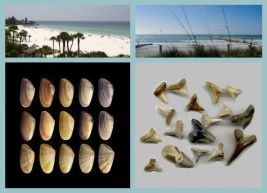 Some views and finds from our Bradenton beaches